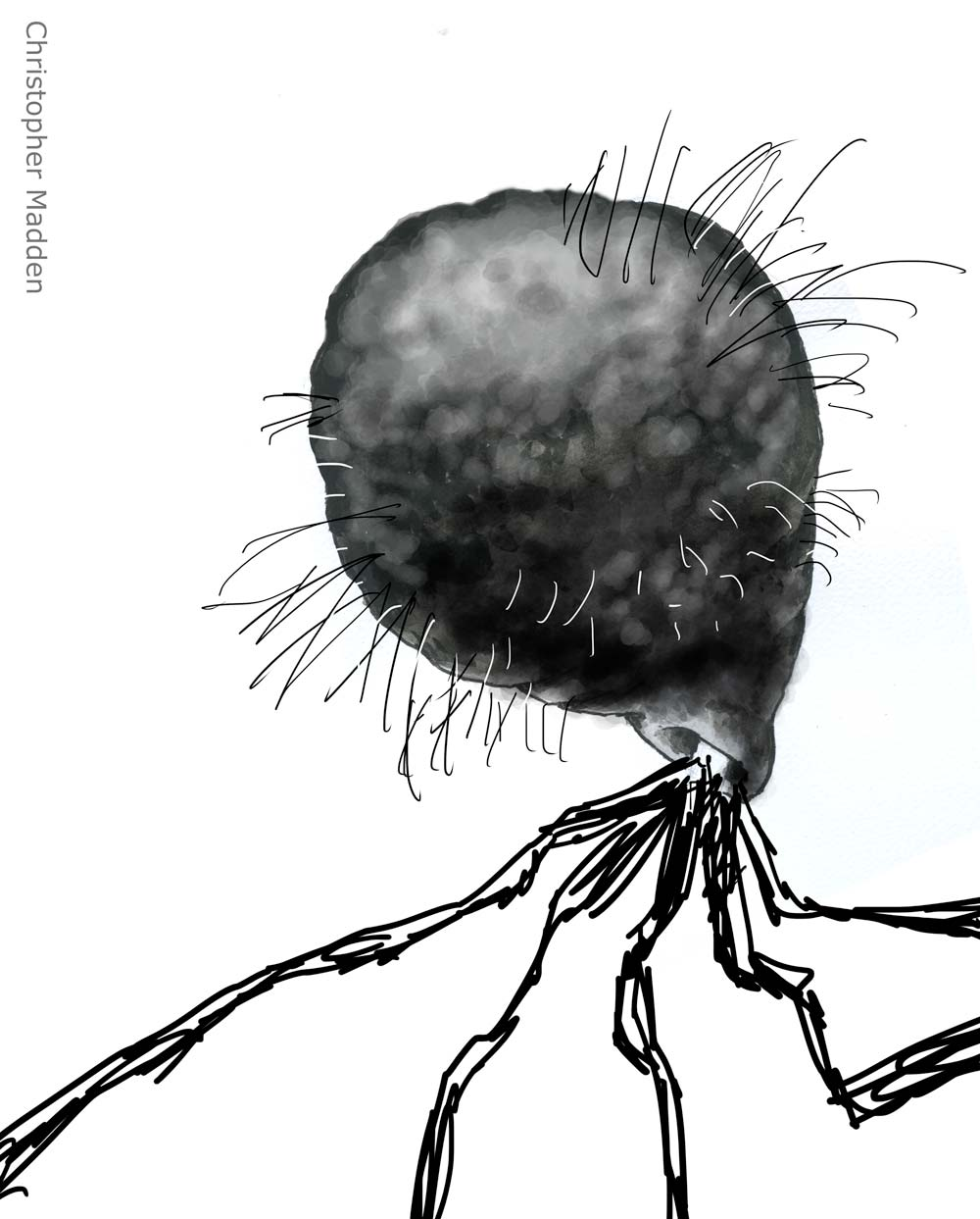 contemporary art monochrome sketch - unsettling imaginary organic form